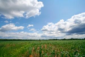 stockvault-agricultural-landscape133389
